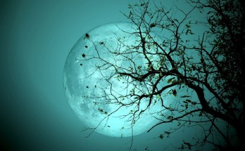 druid signs and celtic astrology