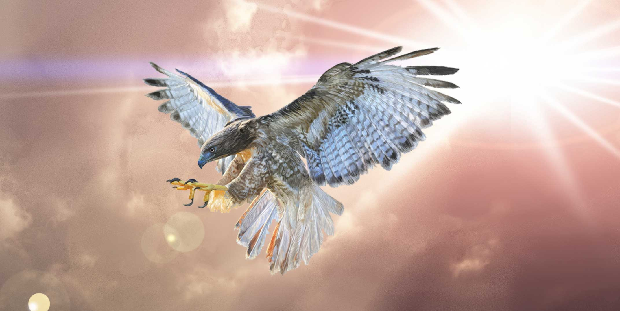 Falcon Tattoo Ideas And Falcon Meanings On Whats Your Sign