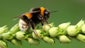 Bee Meaning and Bee Symbolism on Whats-Your-Sign com