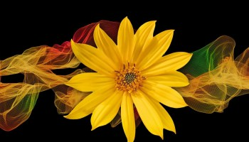 Symbolic Meaning of Flower Colors on Whats-Your-Sign