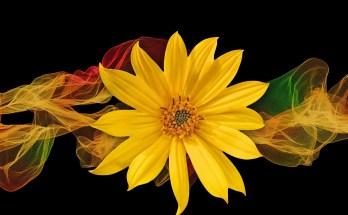 flower meanings in dreams