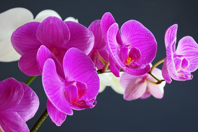 Flower Meanings Orchid Symbolism On Whats Your Sign
