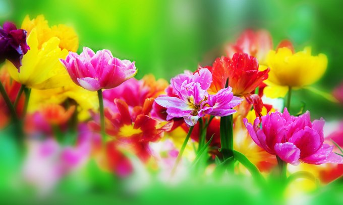 Flowers And Meanings Symbolism Of Flowers On Whats Your Sign