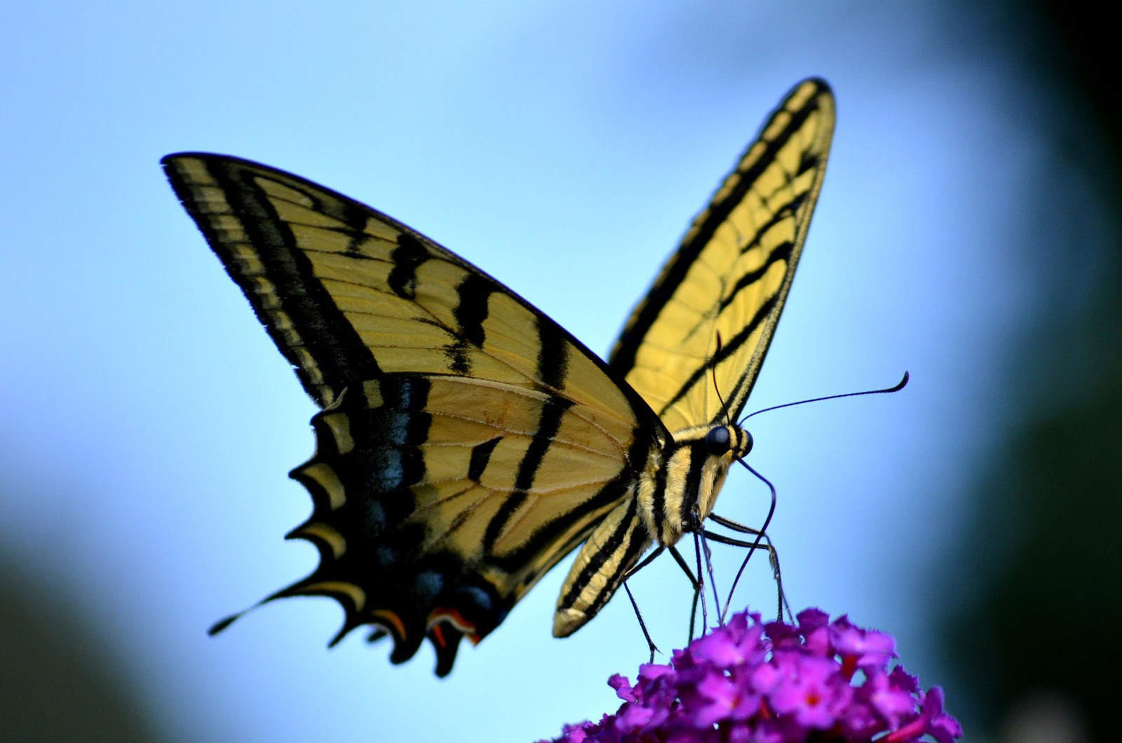 Law of Attraction and Butterfly Meaning on Whats-Your-Sign