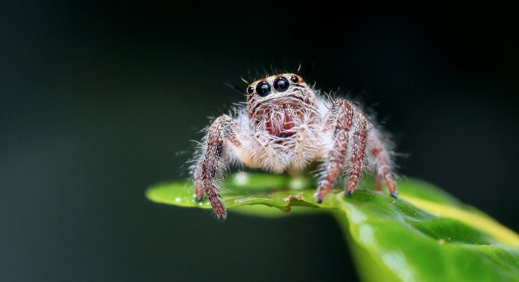 law of attraction and spider symbolism