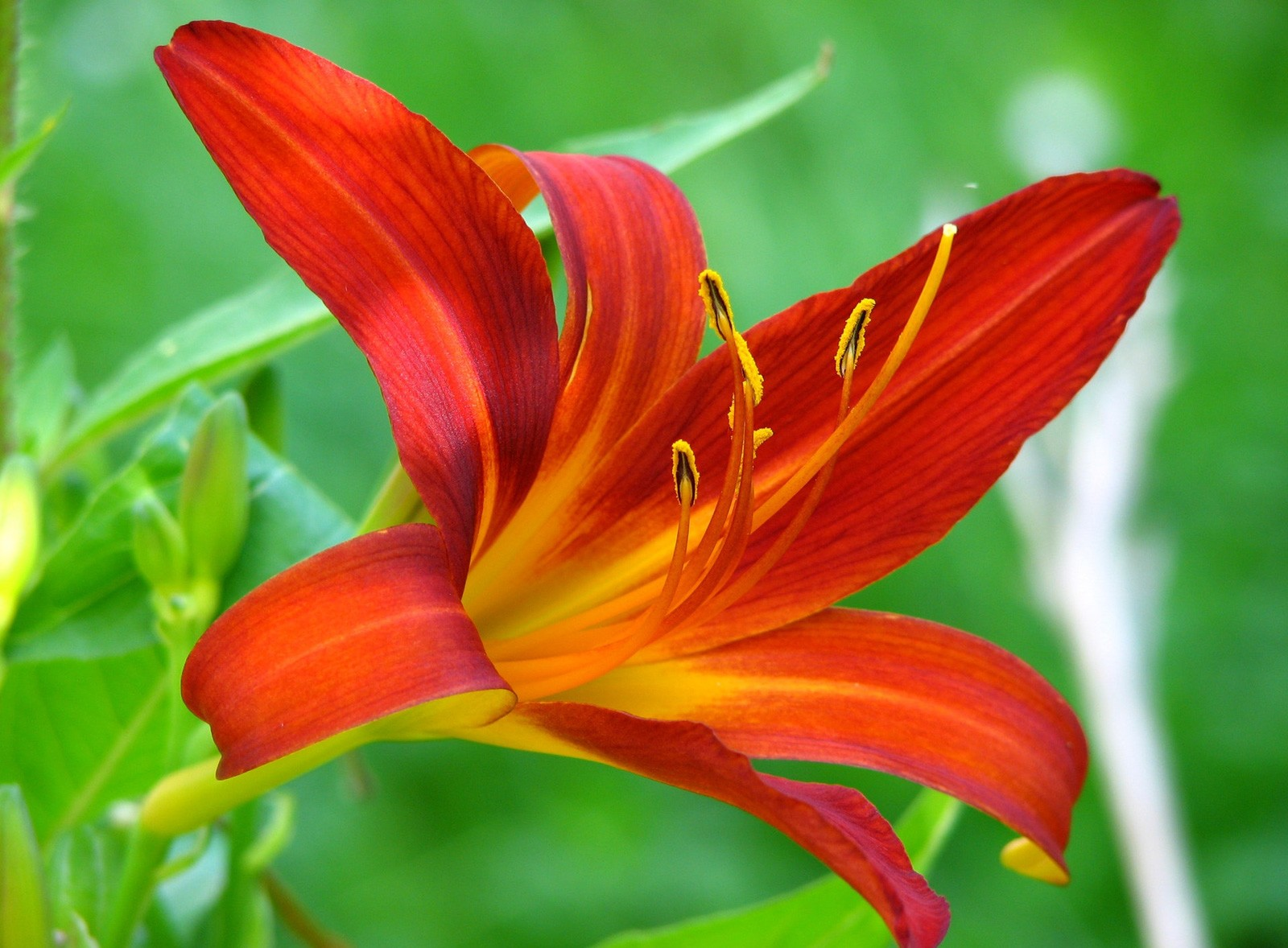 Lily meaning and symbolism of the lily on whats your sign symbolic lily meaning izmirmasajfo