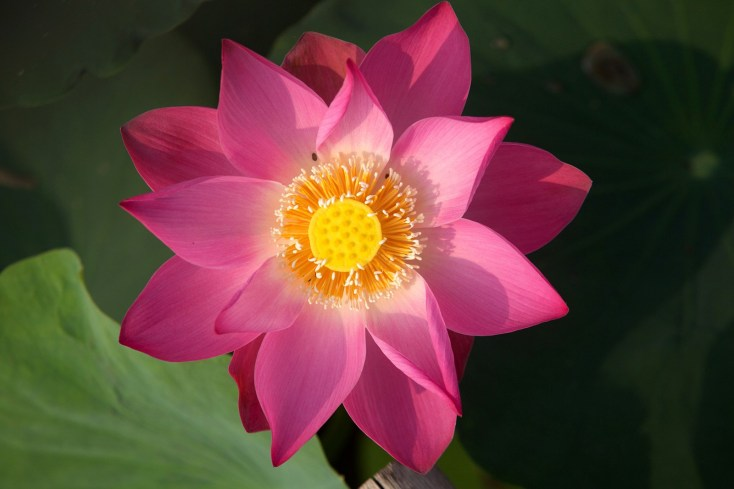 Lotus Tattoo Ideas And Meaning Whats Your Sign