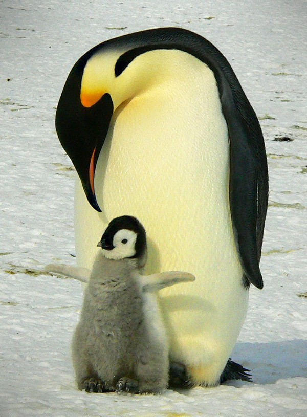 Penguin Meaning Questions About Penguin Symbolism On Whats Your Sign