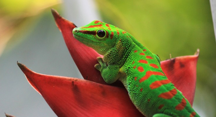 reptile animal totems: Amphibian and reptile meanings