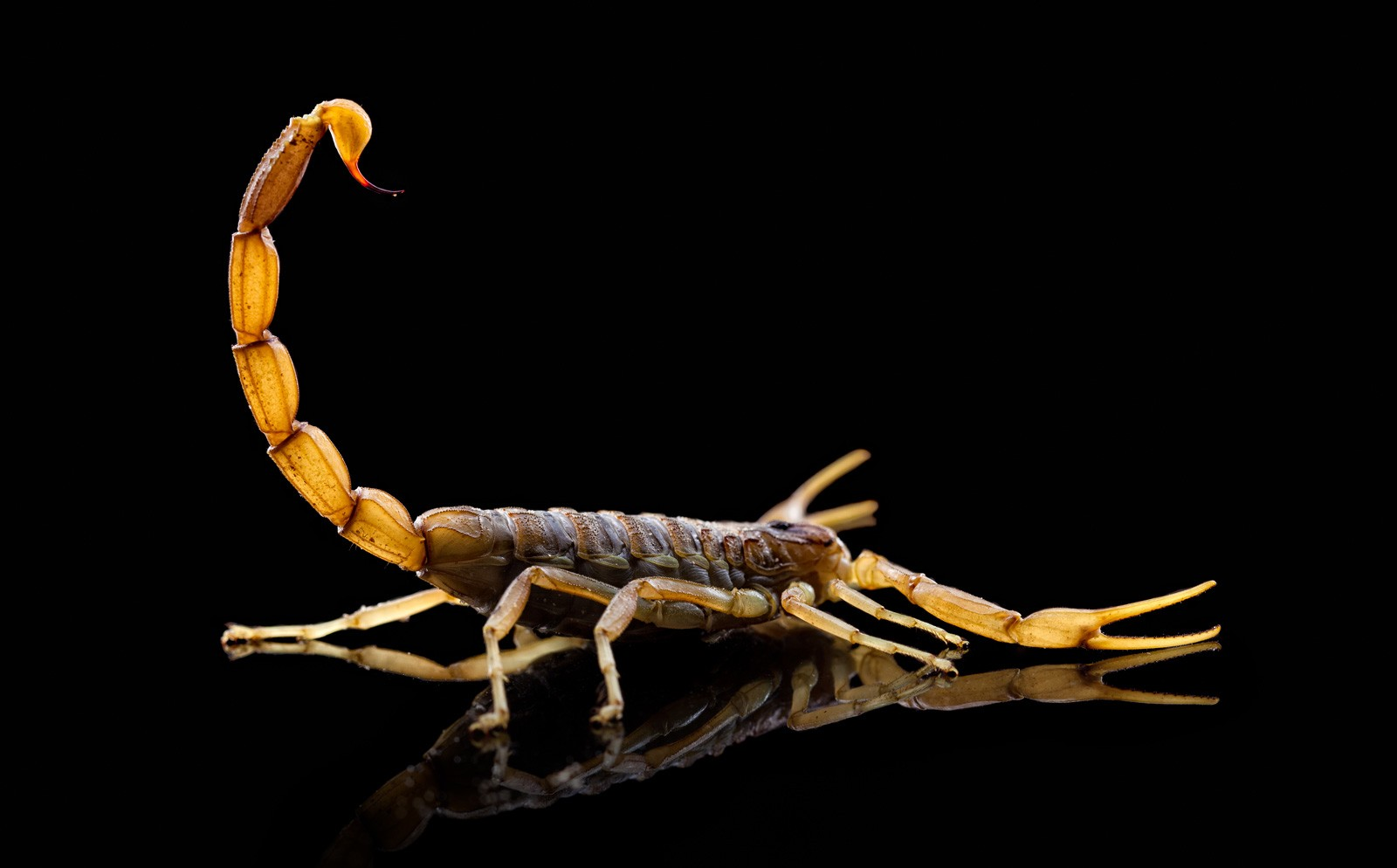 Scorpion Tattoo Ideas And Scorpion Meanings On Whats Your Sign