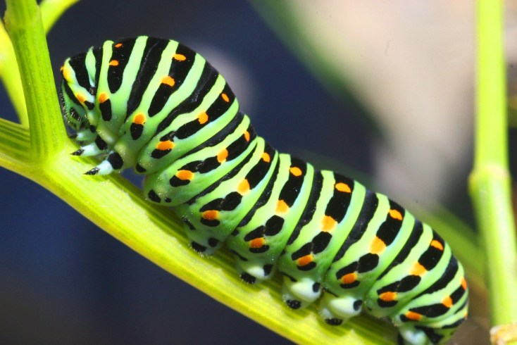 Capturing Symbolic Caterpillar Meaning On Whats Your Sign