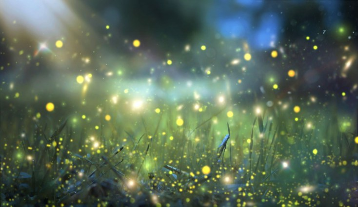 Symbolic Meaning Of The Firefly On Whats Your Sign