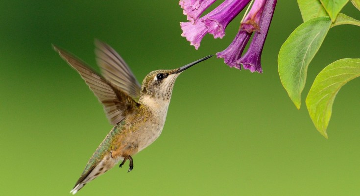 symbolic hummingbird facts