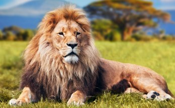 symbolic meaning of lions