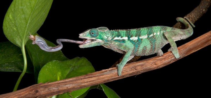 Symbolic Meaning of Lizards on Whats-Your-Sign com