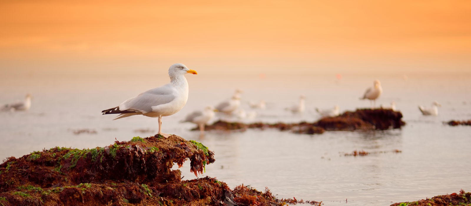Symbolic Meaning of Seagulls on Whats-Your-Sign