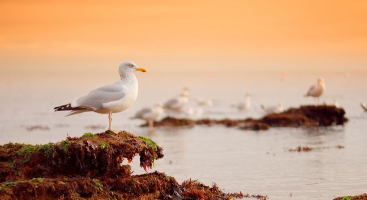 symbolic meaning of seagulls