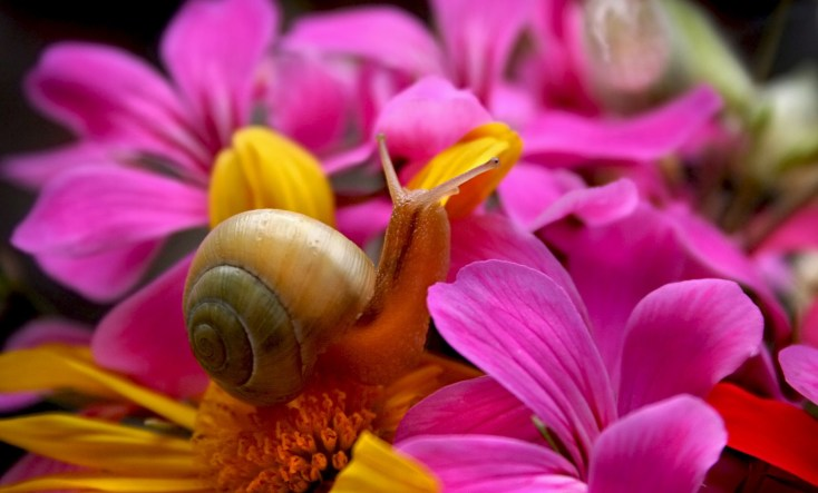 Symbolic Snail Meaning and Understanding Snails on Whats-Your-Sign
