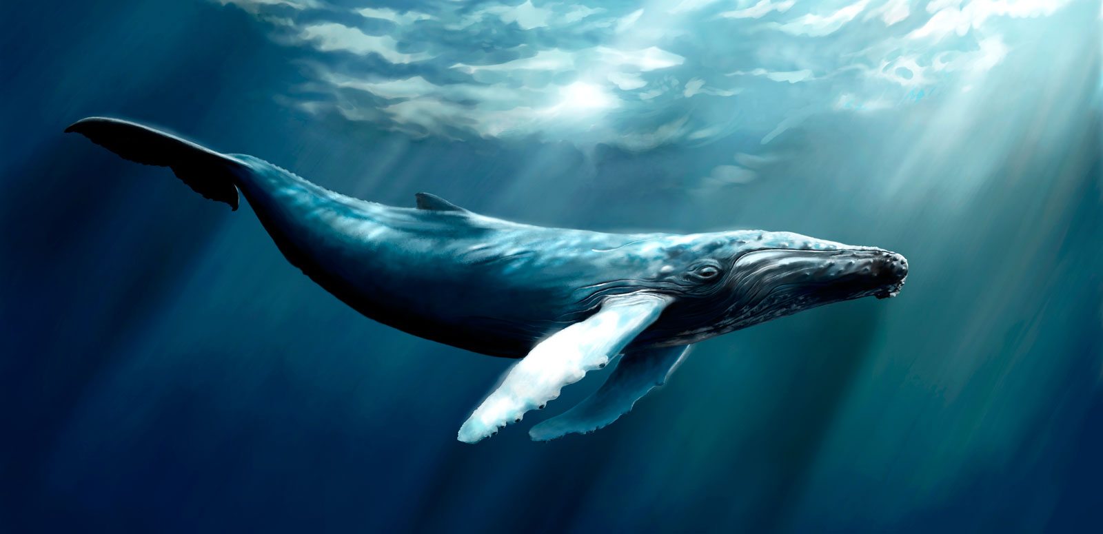 Whale Totem Meaning And Whale Symbolism On Whats Your Sign