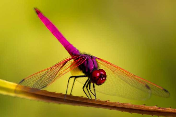 Animal Symbolism Dragonfly Meaning On Whats Your Sign
