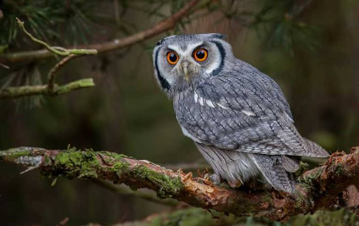 Animal Symbolism Owl Meaning On Whats Your Sign