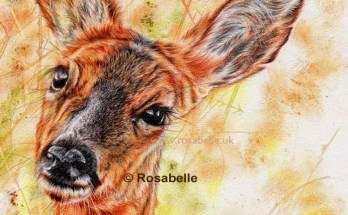 Deer artwork by Rosabelle Art