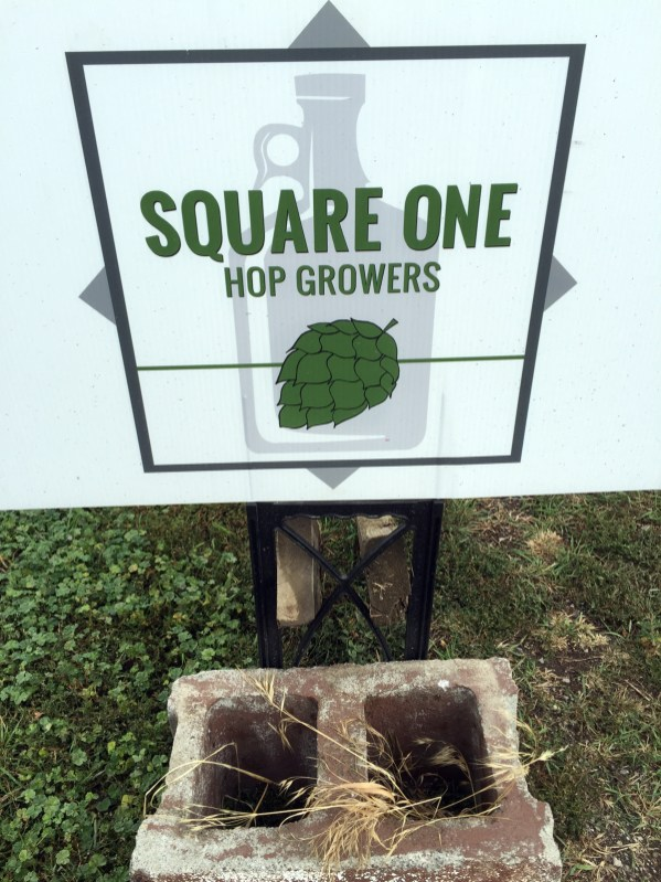 Square One Hops 4