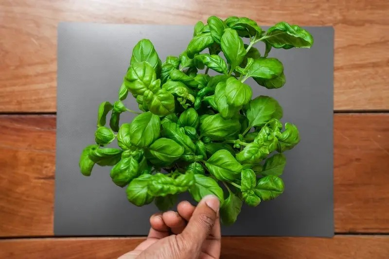 Ten Amazing Health Benefits of Spinach