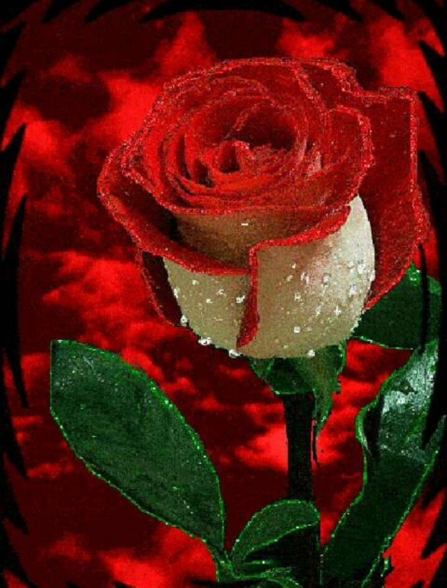 Such as png, jpg, animated gifs, pic art, symbol, blackandwhite, picture, etc. Top 35 Whatsapp Dp Rose Flowers Rose Images For Whatsapp ...