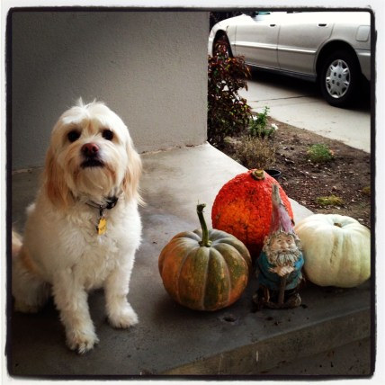 A few of my favorite things: my sweet puppy, gnomes, and anything fall!!