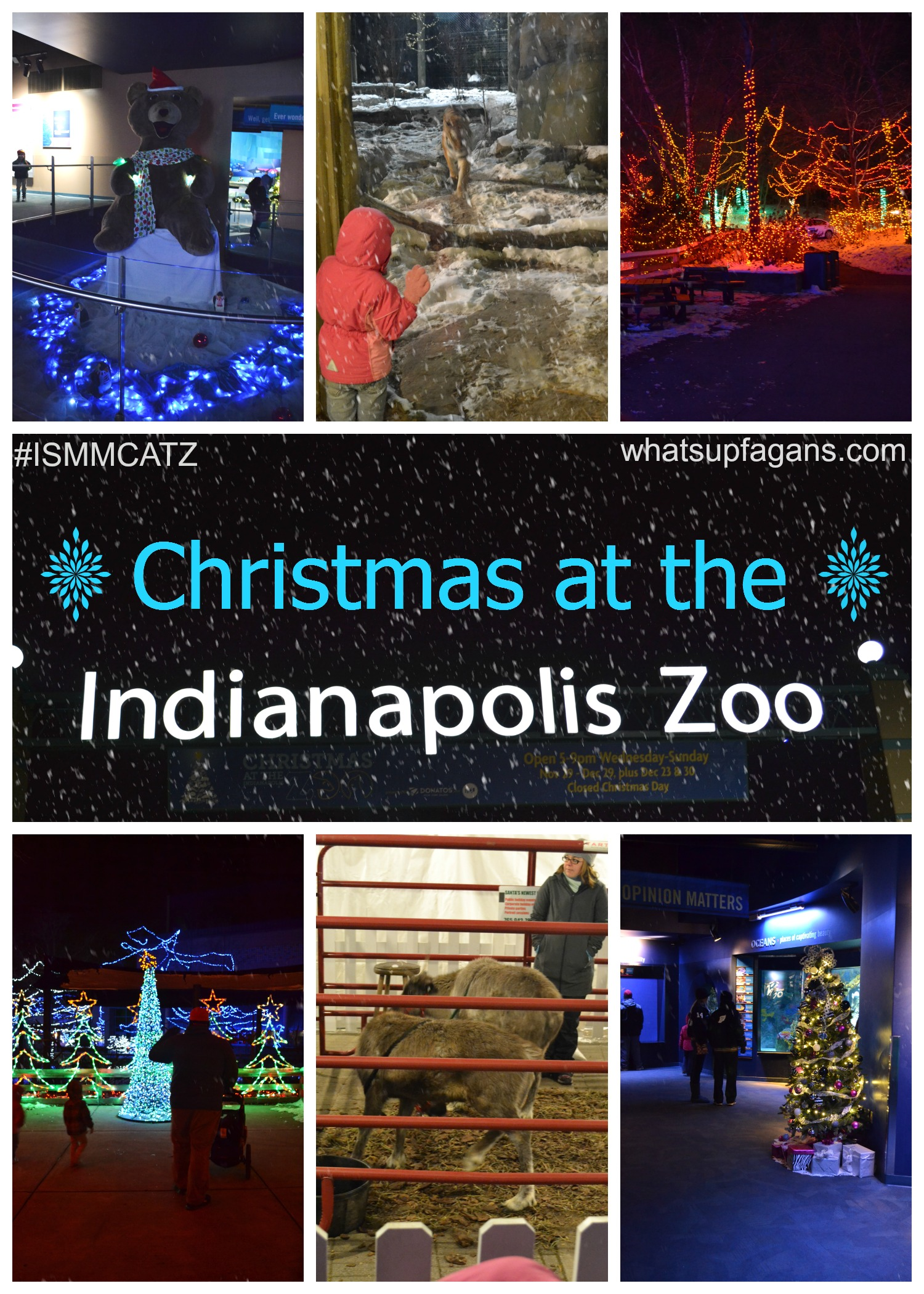 Zoo Lights Indianapolis