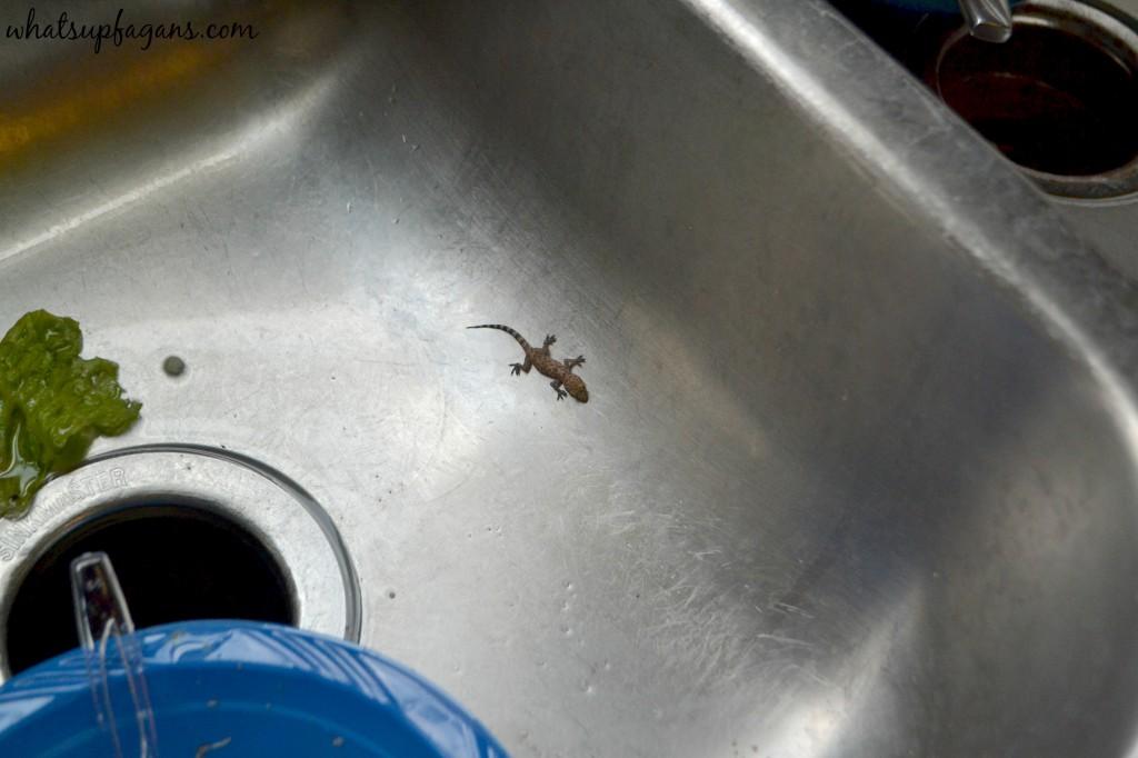 Lizard in the sink