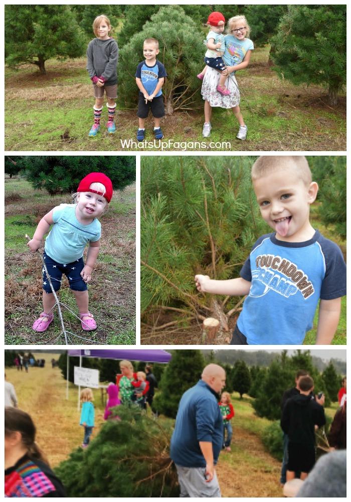 christmas-tradition-tree-farm-real-cut-christmas-trees