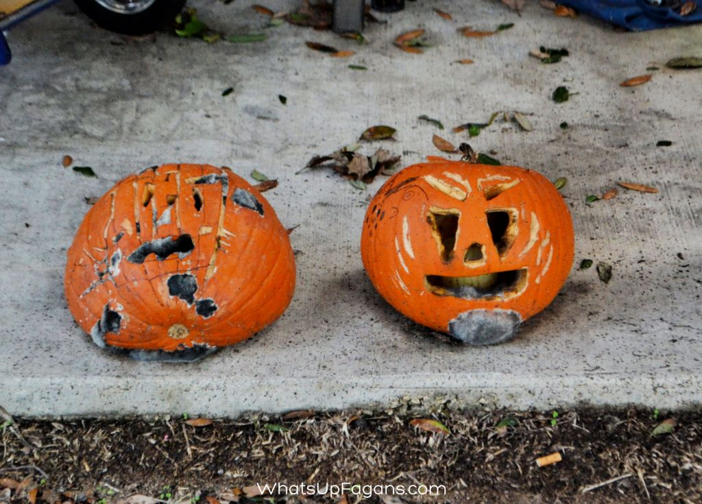 two rotten molding jack o lantern pumpkins on a porch - great way to teach Halloween science to kids