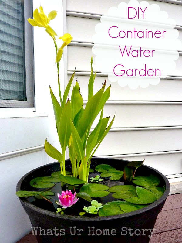 How to Set up Mini Water Gardens on Your Deck | Whats Ur Home Story