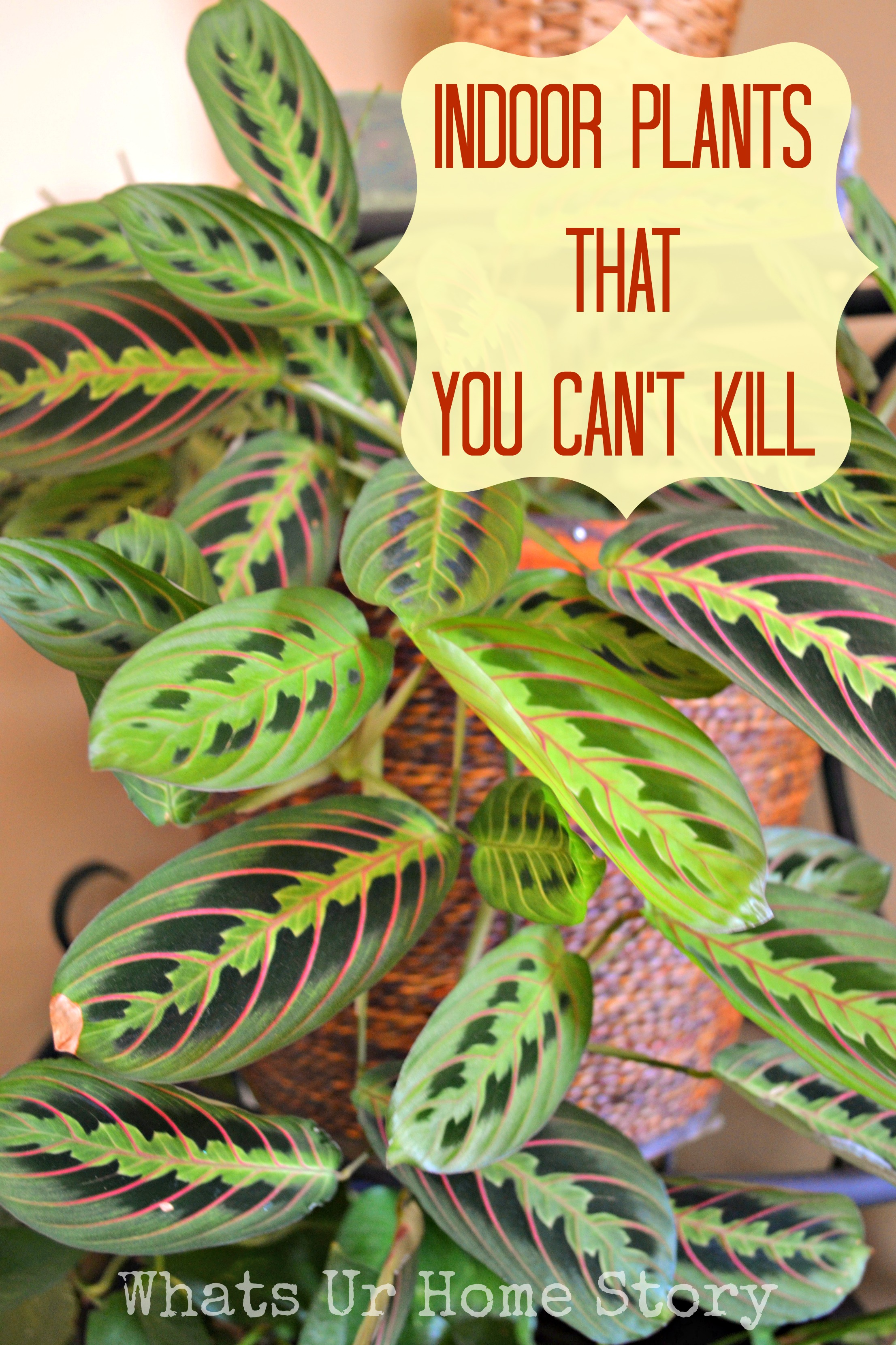 Indoor Plants That You Just Can\'t Kill | Whats Ur Home Story