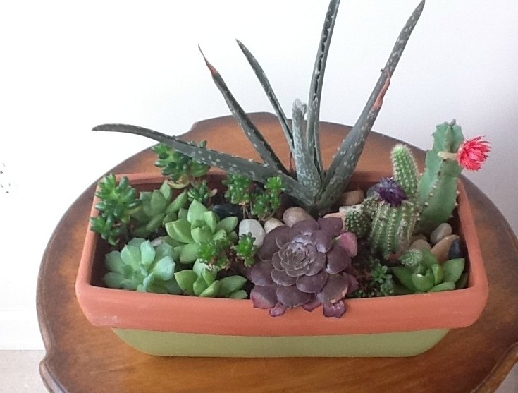 Reader Showcase   Succulent Garden