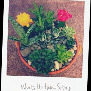 Whats Ur Home Story: succulents planter