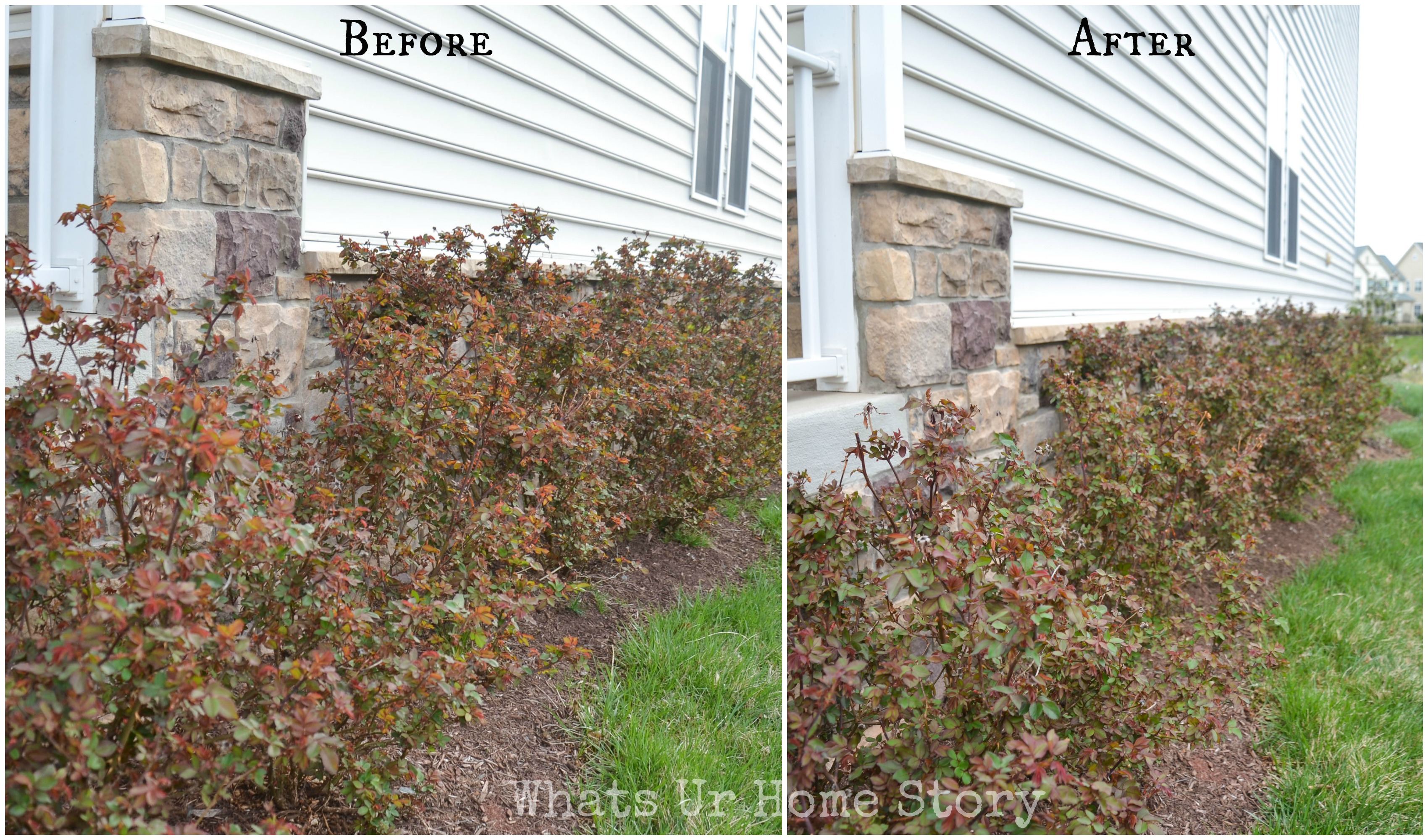 How to Prune Rose Bushes in the Fall