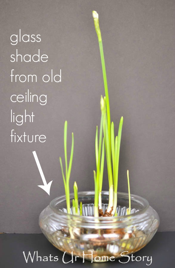 How to Grow Paperwhites Indoors