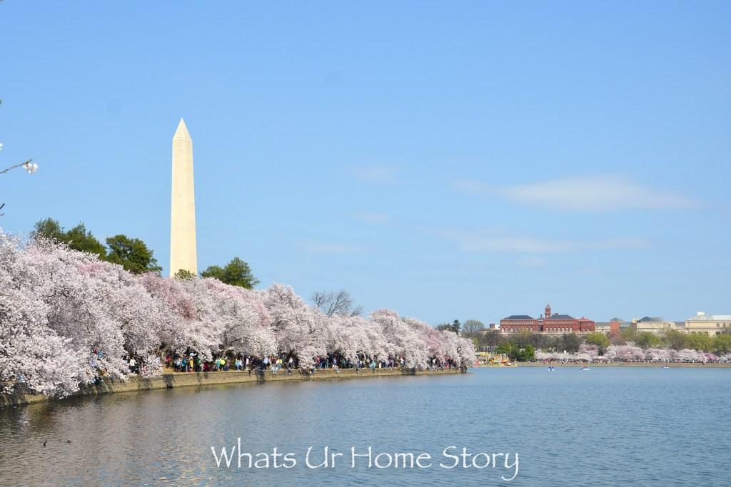 Cherry Blossom Festival 2016