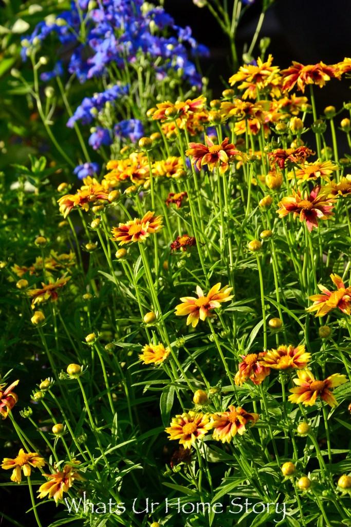 Spring Garden 2017