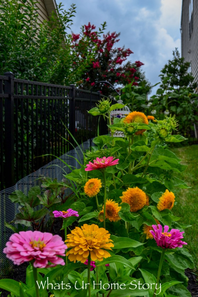 My Cottage Garden   Summer 2018