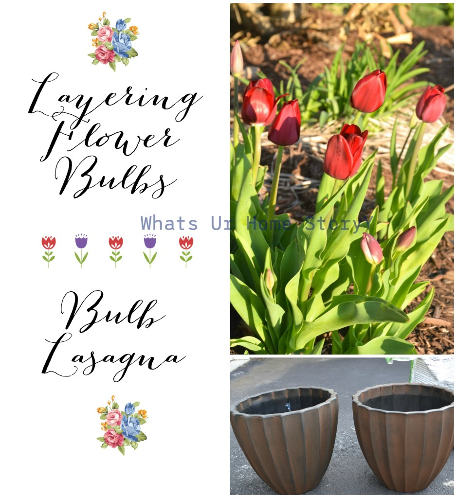 Bulb Lasagna or Layering Flower Bulbs