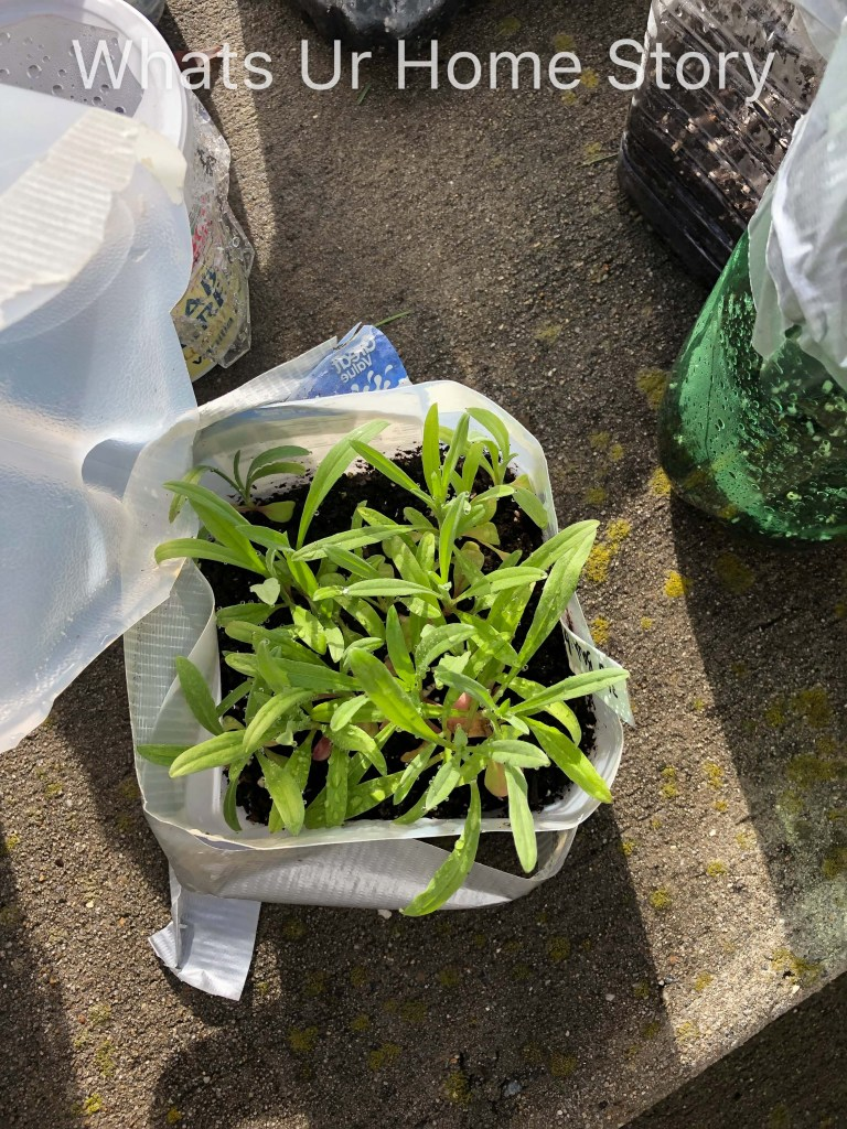 Winter Sowing Success   2019