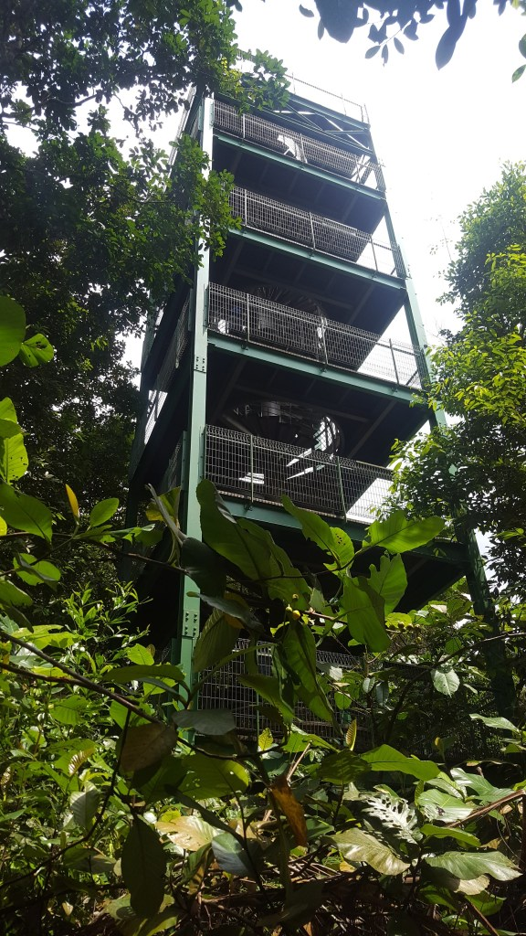 MacRitchie Reservoir - Jelutong Tower