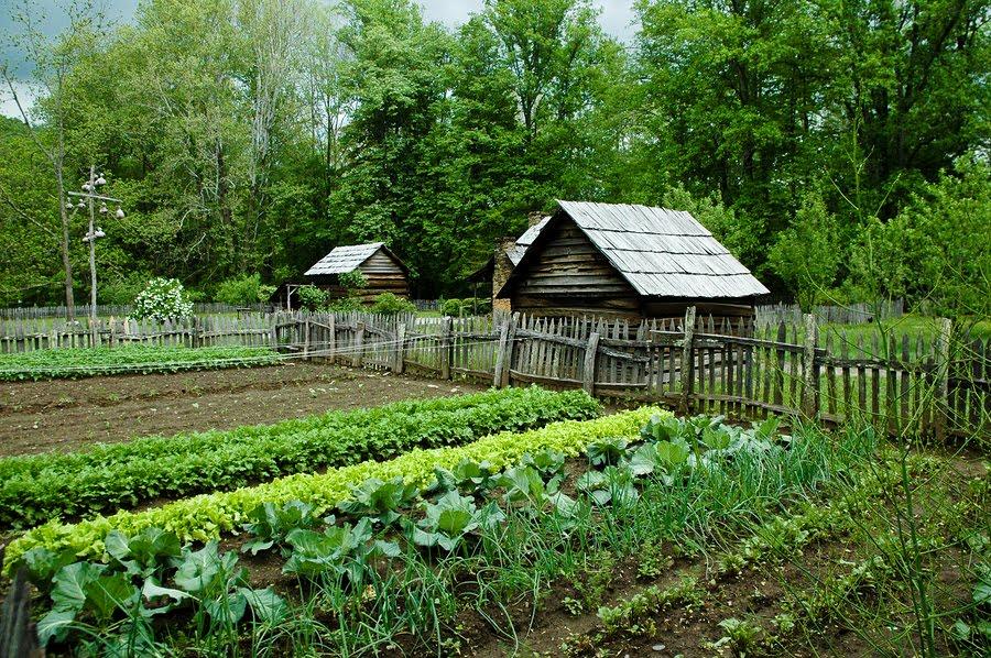 Chapter 18 – Organic Gardening