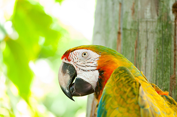 How to Make Your Parrot Talk – Useful Tips