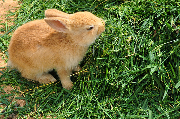 How to Feed Correctly a Pet Rabbit – Useful Diet Info