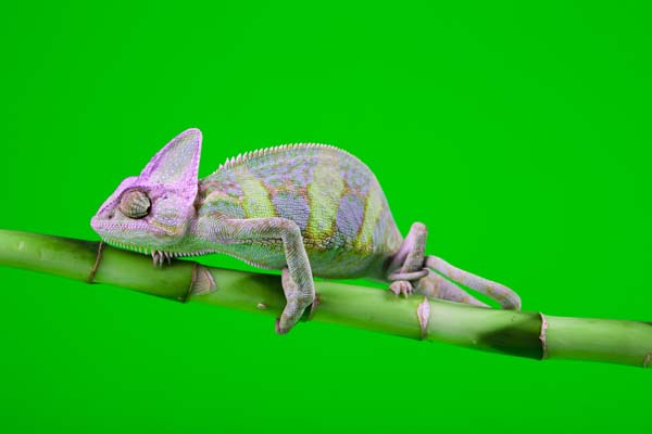 Use Exotic Pets to Take Amazing Photographs